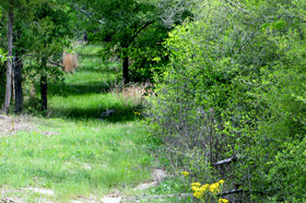 Kenneywood Lot For Sale Bellville Texas Austin County